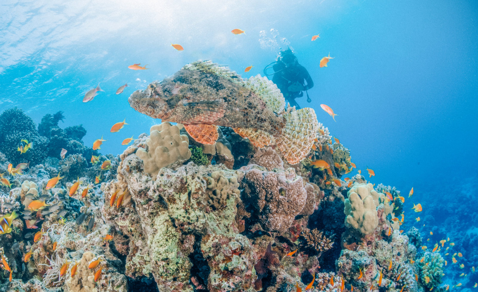 Becoming a certified padi open water diver in aqaba for Aqaba dive
